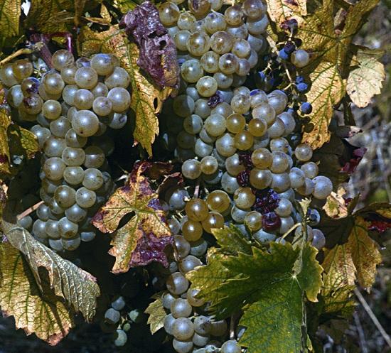Toscana, riqueza enogastronómica