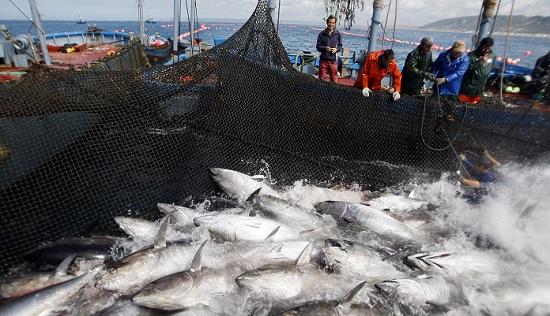 A Cádiz en busca del atún de almadraba