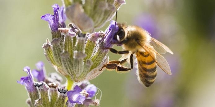 Con la miel en los labios (1)
