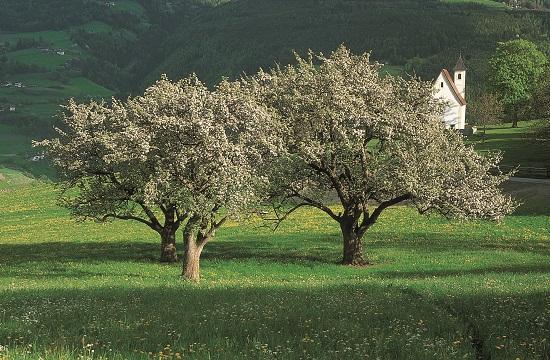 4 planes primaverales con sabor a manzana