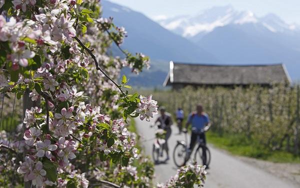Rutas en bici entre manzanos