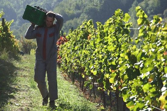 Viticultura heroica en la D.O. Ribeira Sacra. Enoturismo