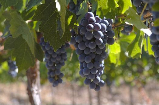 Enoturismo en Murcia. ¿Conoces la Ruta del Vino de Yecla?